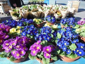 palestine tx plant and flower market