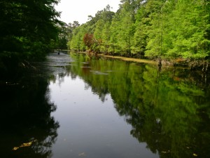 I took MANY photos during our canoe trip...gorgeous scenery! I didn't get any gator shots, unfortunately.