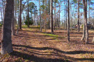 Owner Finance Land: 1 to 31 Acre Lots Available - Palestine, TX