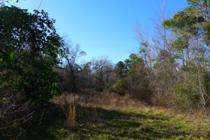 31.6 Acre Lot Palestine Tx 75801 - Land for Sale #14 & ACR 363